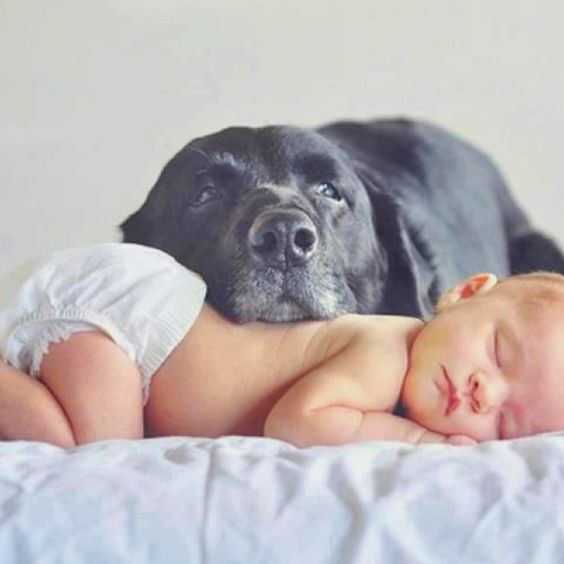 Τα μωρά που ζούσαν με σκυλιά ήταν πιο υγιή από τα μωρά που ζούσαν με γάτες.